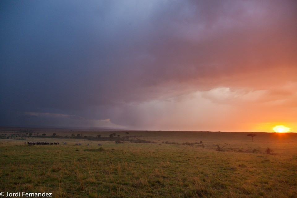 A group of wildebeest are pacing under a heavy storm