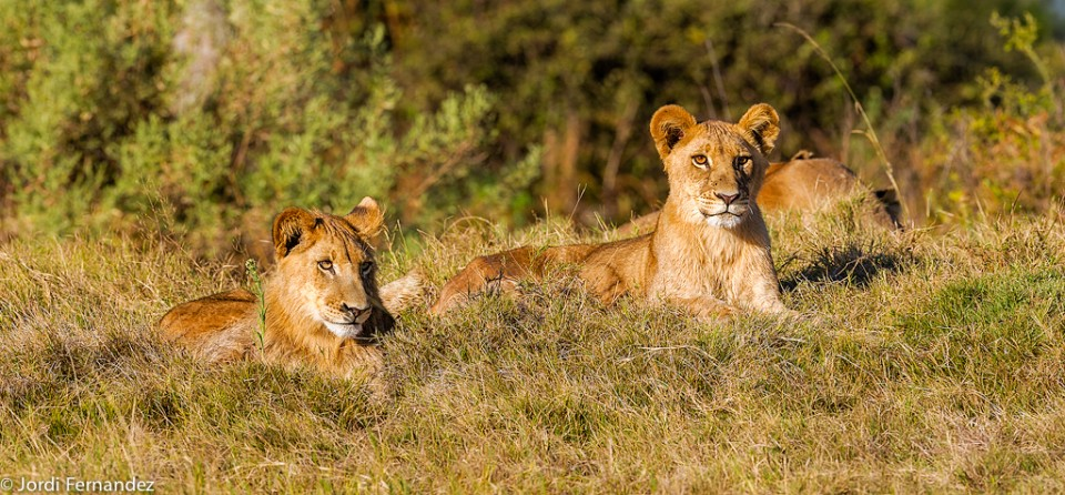Relaxed cubs